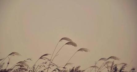从诗经看春秋——<黍离·知我者谓我心忧> 一首怀念故国的短诗