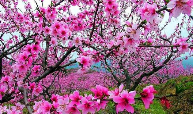 添一笔枯木盛开,岁月静好春不老