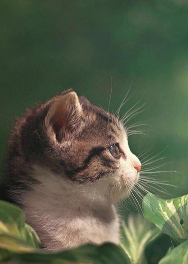 动物情话:我要做你的小太阳,要不萌死你,要不晒死你