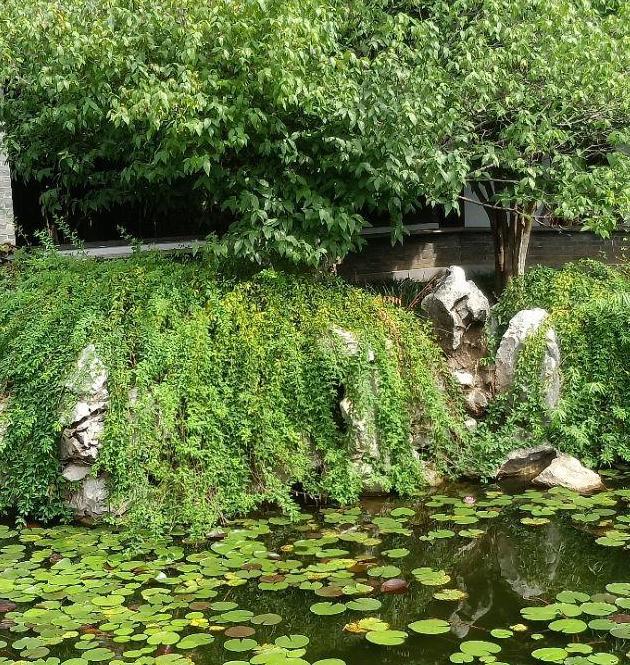 枯树重生花万朵,古宅庭院放光辉      /小诗两首