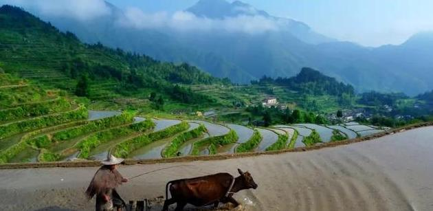 一粒稻米的一生丨春种一兜稻秧,秋收一把稻谷