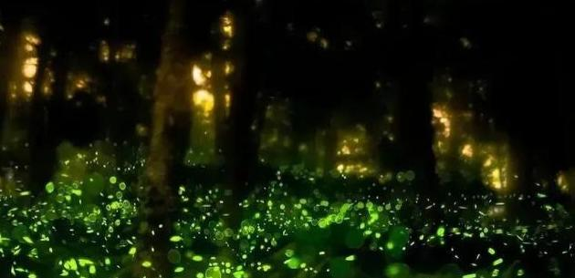 点染梦境的萤火虫絮语,星月交辉、一度千年