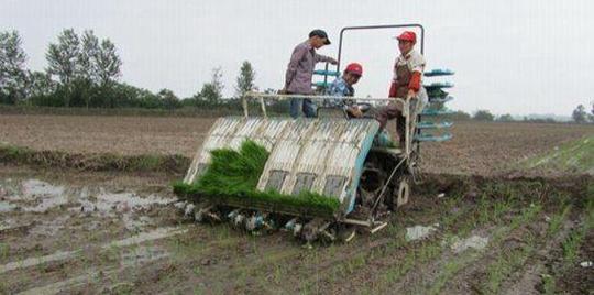 正是春耕农忙时,说说小时候种田那些事