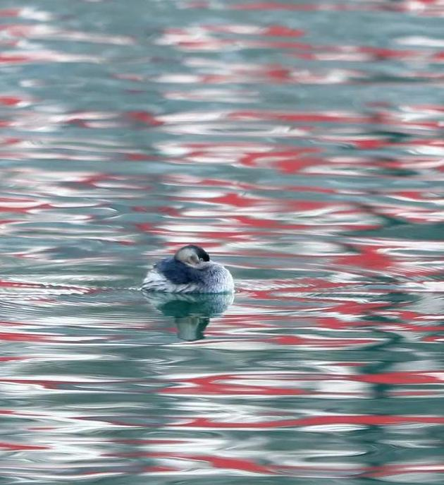 们们:梅花开时衡湖春