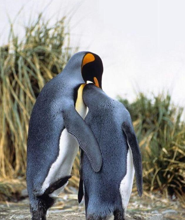 情天欲海——动物爱情