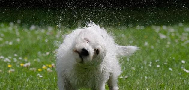 """读懂狗狗这些""""行为语言"""",能让你们交流更愉快"""