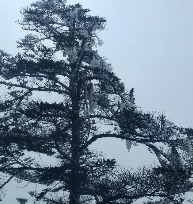 枯树开花逢盛世
