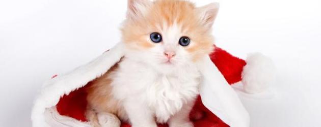 体现爱猫的文艺句子 猫有九条命唯有一颗心