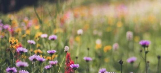 去草原旅游心情说说 让心灵去旅行吧